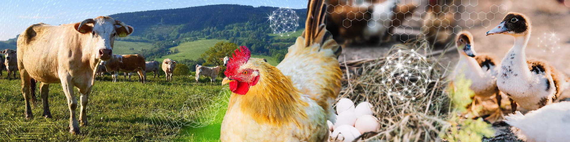 """<span style=""""font-size: 24pt;"""">World's Poultry Congress 2021</span> <div id=""""gtx-trans"""" style=""""position: absolute; left: -29px; top: 24px;""""></div>"""